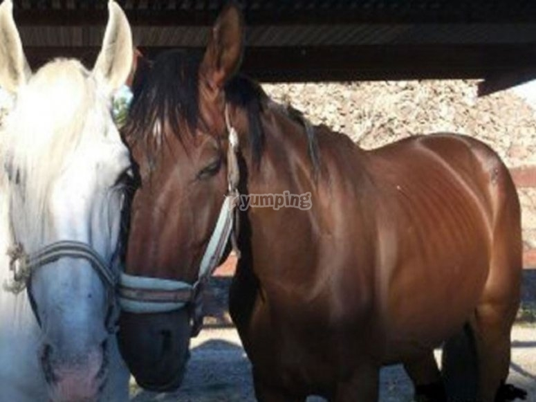 The protagonists of our equestrian center