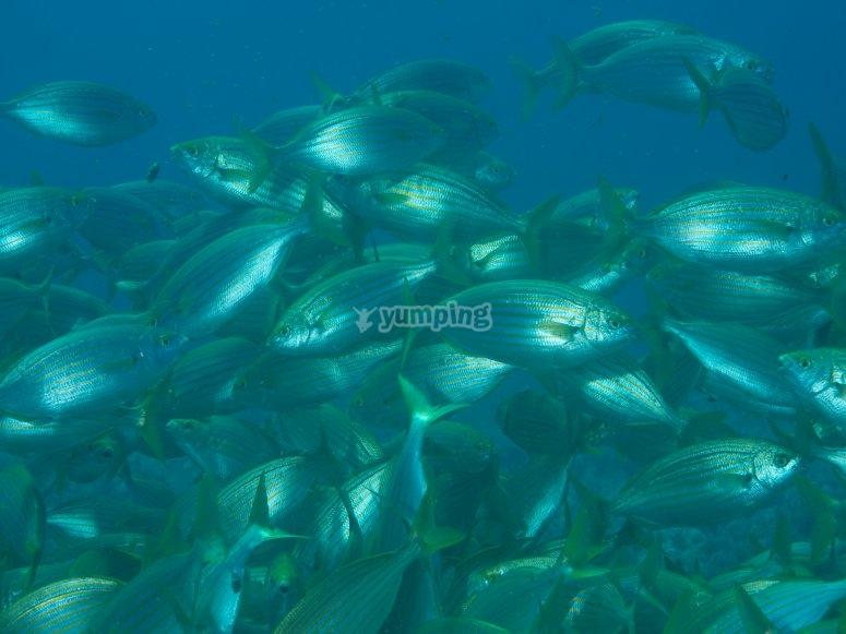 福门特拉岛海洋动物群