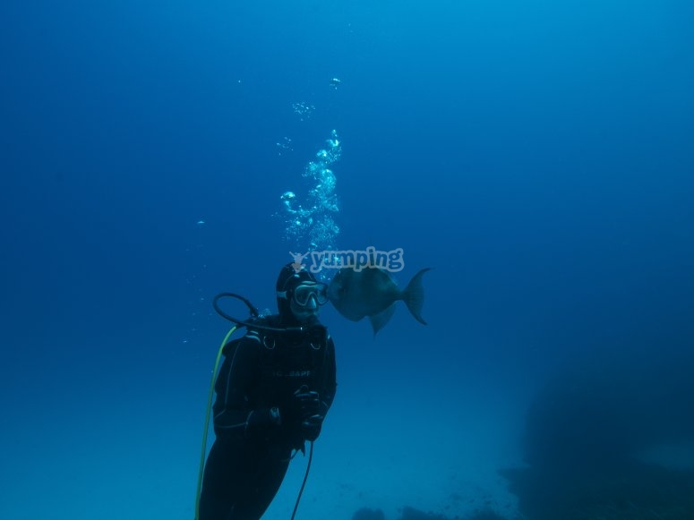 福门特拉岛湾潜水浸泡