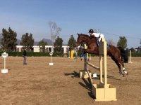 10 clases de equitación para niños en Burriana