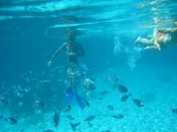 从普拉特亚米格约恩出发的4小时浮潜之旅