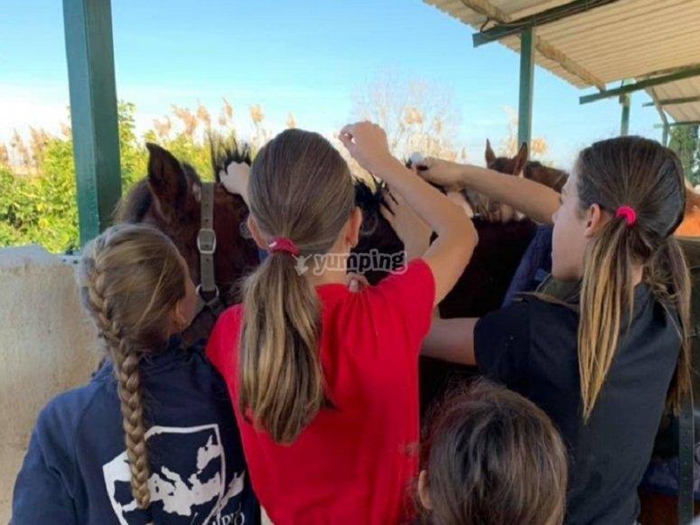 Las niñas cepillando al caballo