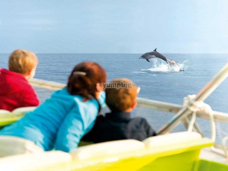 海豚乘船游览