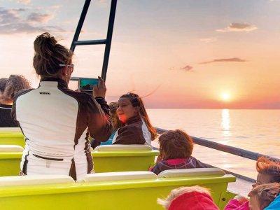 Ruta barco y avistamiento cetáceos Port d'Alcudia