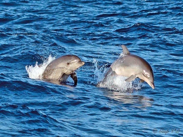 在马略卡岛观看海豚