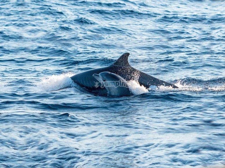 乘船出发去看海豚
