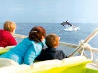 乘船游览和赏鲸