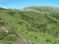 阿斯图里亚斯的草地