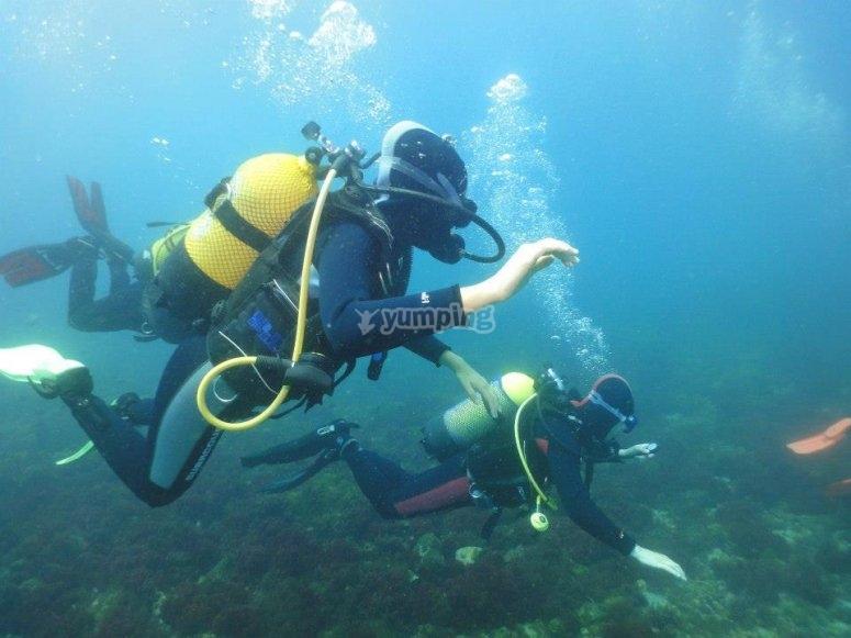 Submarinismo en Isla de Benidorm