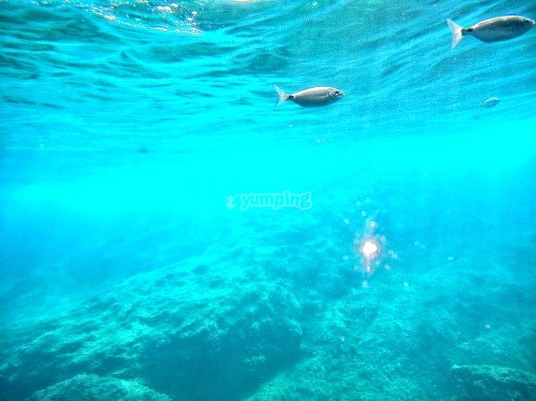 Descubriendo el fondo marino desde el barco