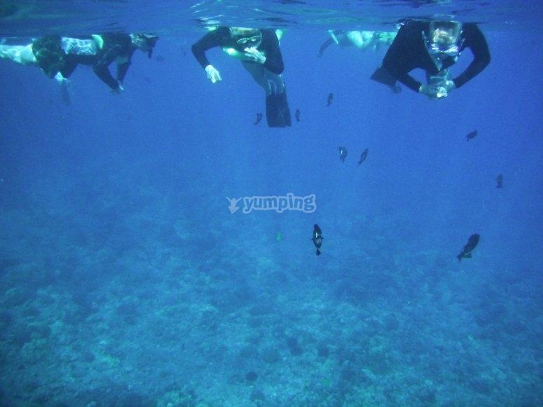 通过浮潜发现贝尼多姆