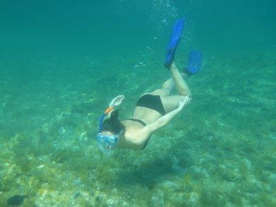 Excursión de snorkel por Islote de Benidorm