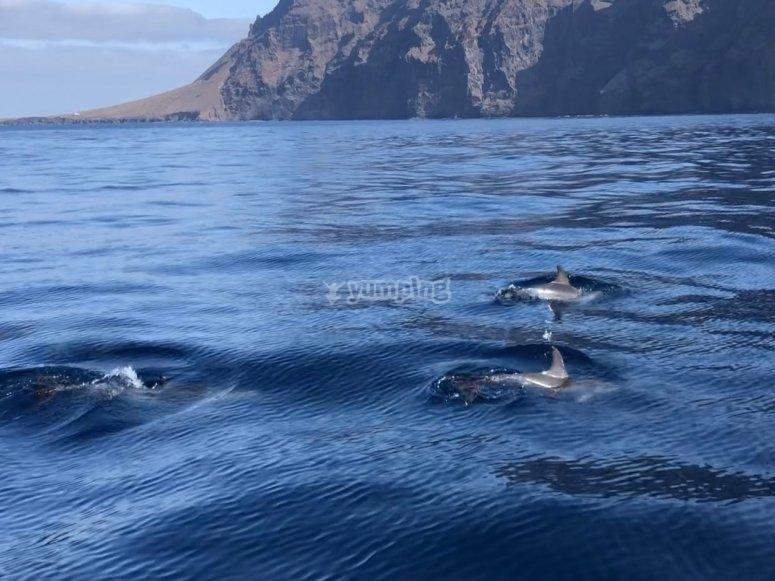 Osservazione delle balene di Tenerife