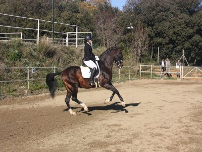 Day horse riding camp in Maresme 7 days