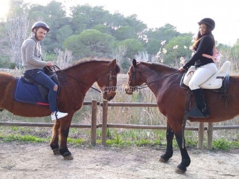 With the equine as a couple
