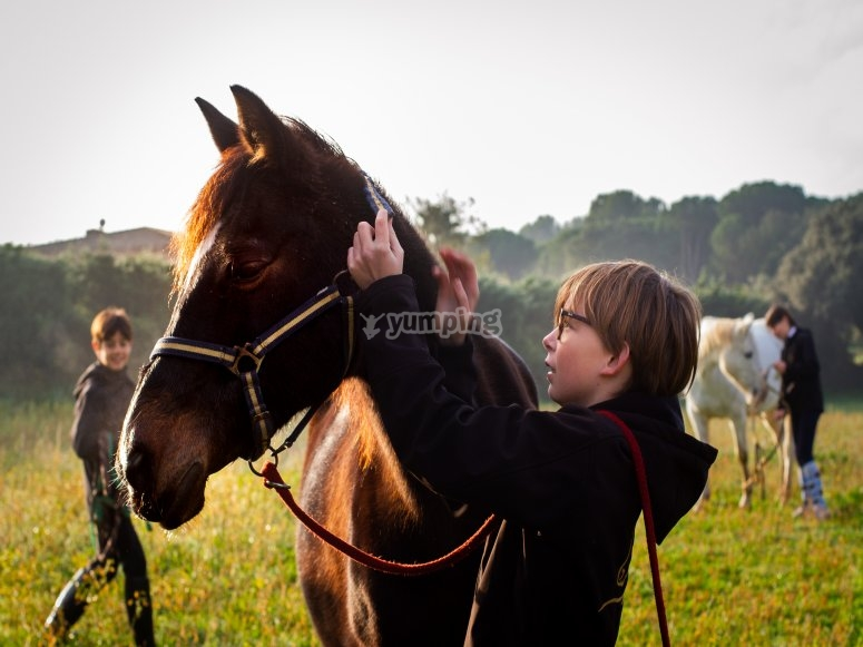 Little one caring for the horse
