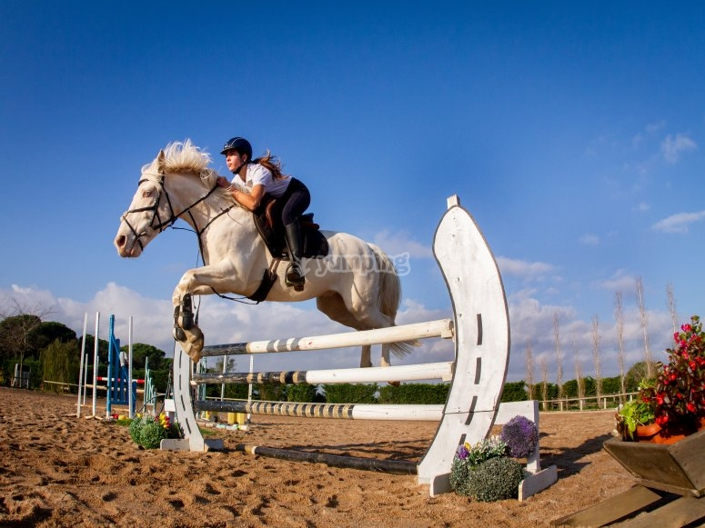 Obstacle jumping with the horse