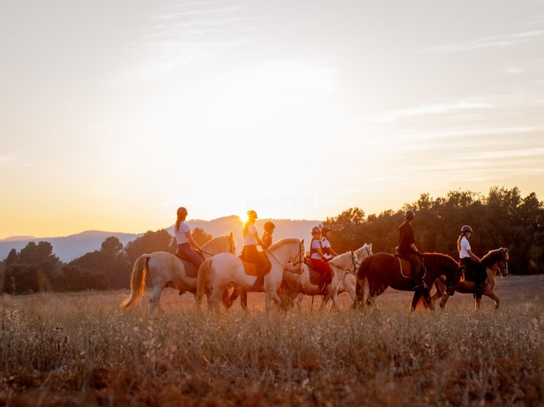Riding a horse at sunset