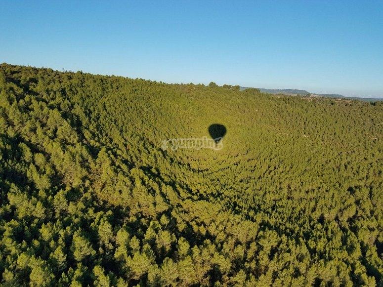 Riflessione del nostro pallone nella foresta