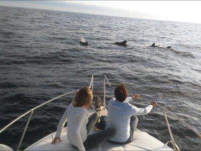 Sea Passion Avistamiento de Cetáceos