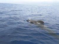Los cetaceos viajan a nuestro lado