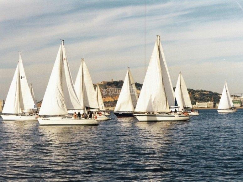 比赛中的不同帆船