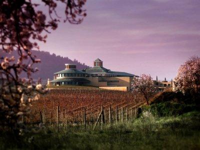 Visita la cantina e il museo del vino con il menu di tapas Briones