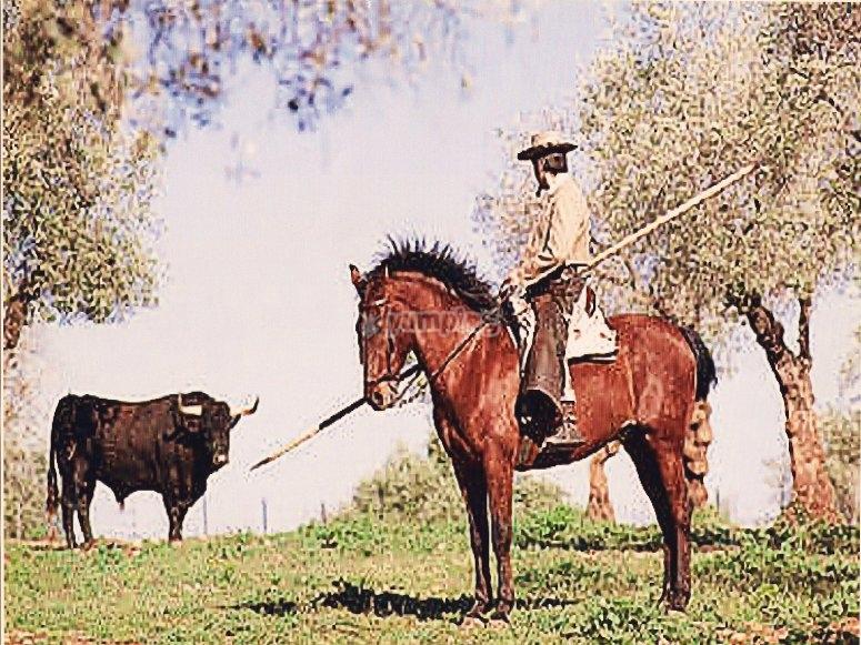 Toro y caballo