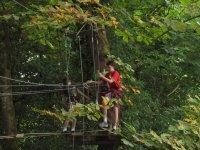在树上冒险