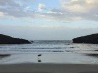 Con la tabla de surf en la orilla