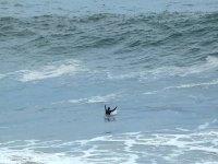 Disfrutando de las olas surfeando