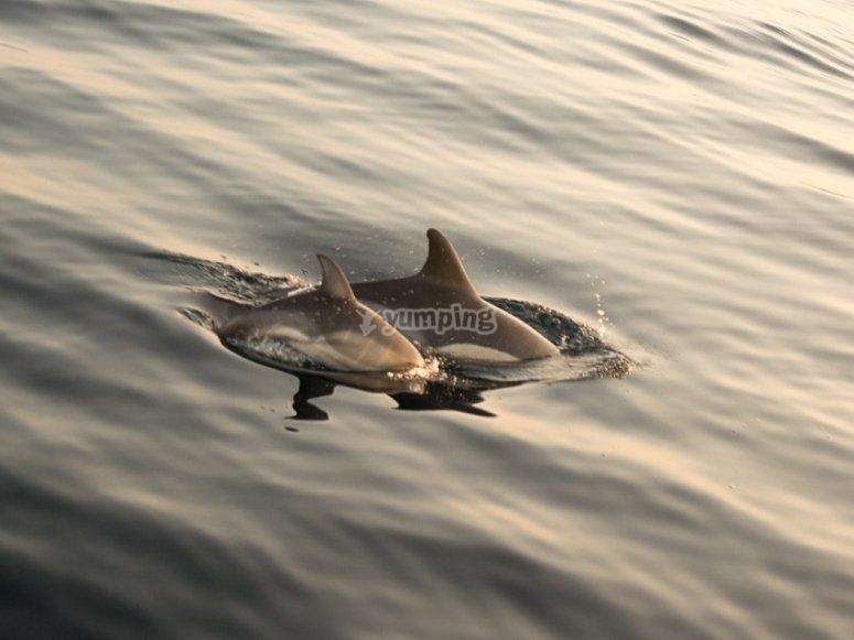 Delfines en la costa de Estepona