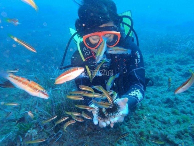 发现海洋动物