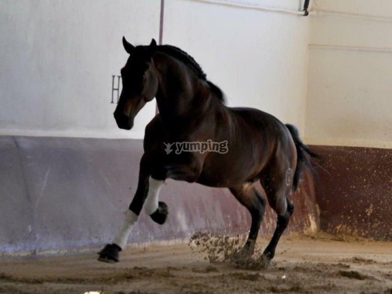 内径小跑的马匹