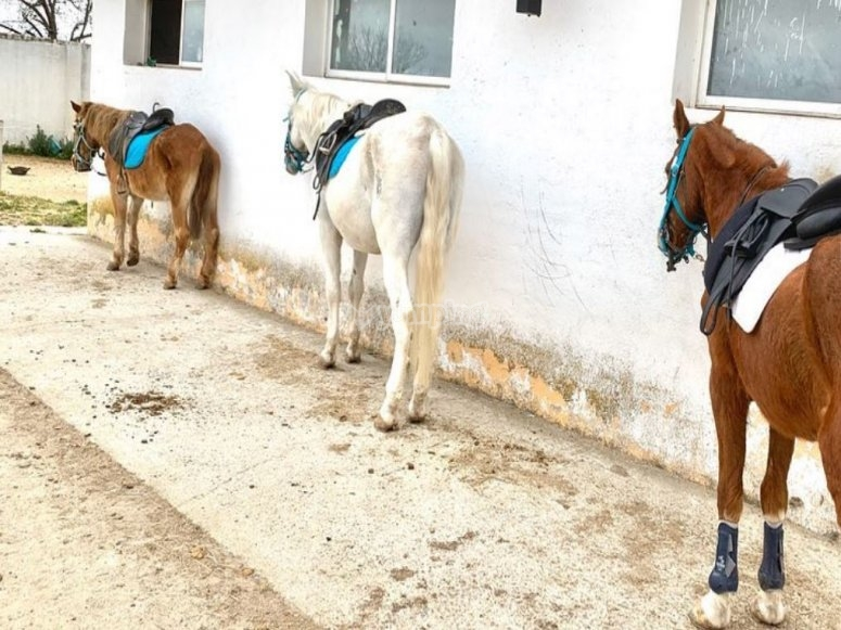 为课程准备的马匹