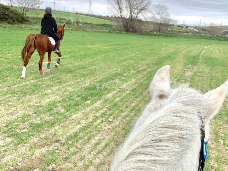 Cavalcando i cavalli intorno al centro