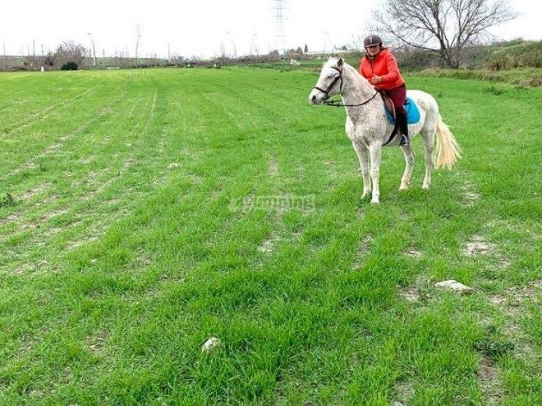 A proposito del cavallo in Getafe