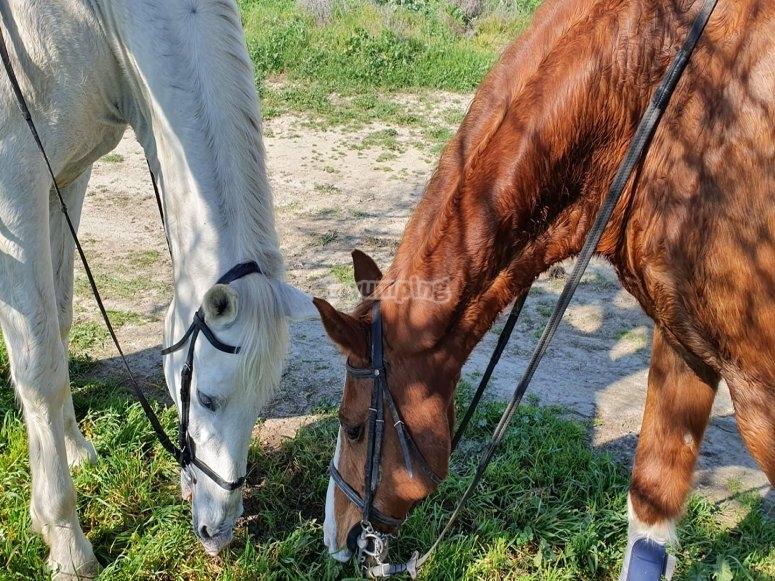 Alcuni dei nostri cavalli mangiano