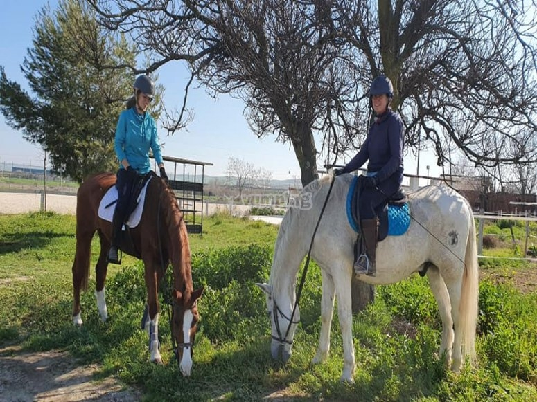Alunni sui cavalli
