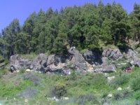 Rocas ante el bosque