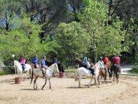 Primera toma de contacto con los caballos