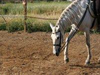 caballo en una finca.jpg