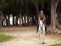 paseando a caballo entre los arboles