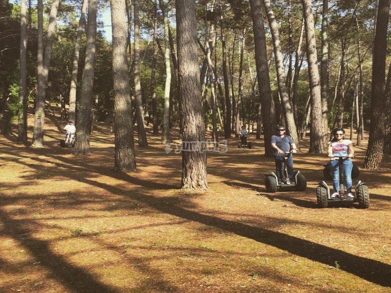 赛格威上的小树林