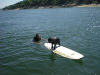 Dog on the surfboard