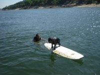 Perro en la tabla de surf