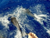 Paseo en barco para avistar cetáceos en  Getxo 6 h