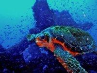Al encuentro de la tortuga