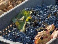 Los mejores vinos mallorquines