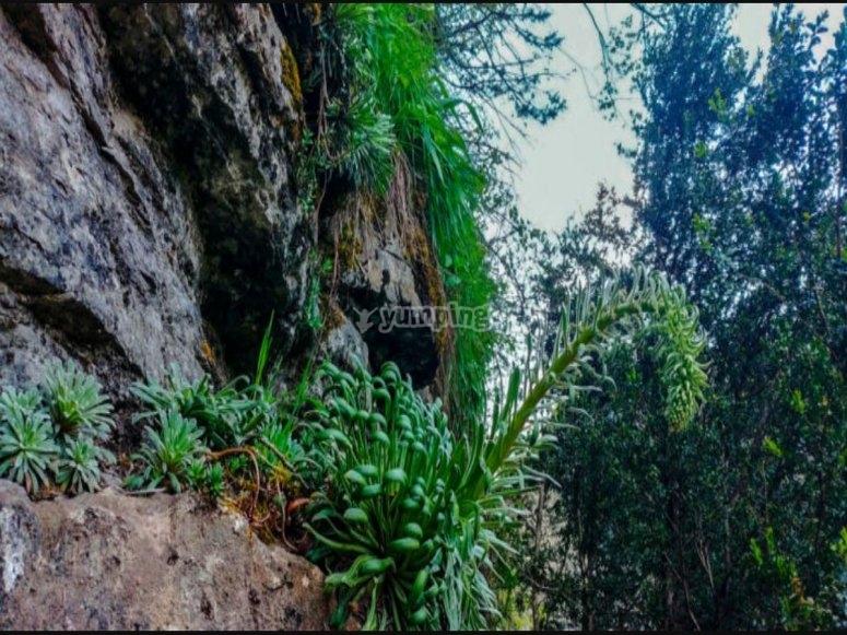 Vegetación abrupta en la ferrata del Sorrosal